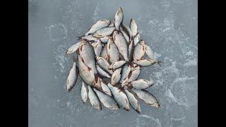 Отчеты о рыбалке за апрель свердловской областика
