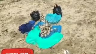 В посёлке Волчанец, люди радуются выброшенным морепродуктам
