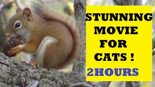 MOVIE FOR CATS: ENTERTAINMENT FOR CATS. Hungry Birds, Squirrels, and Rab...