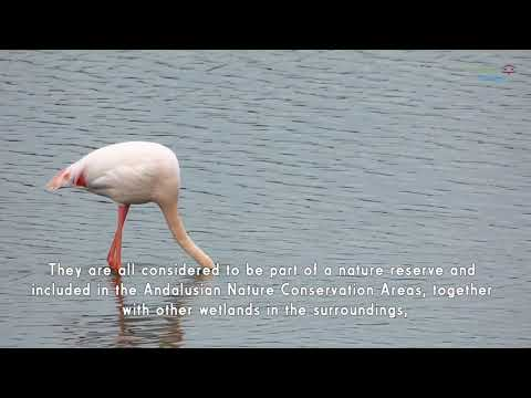 Birding Málaga. Lagunas de Campillos