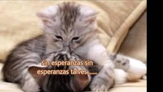 ♥UNA CERVEZA ♥ RRAFAGA - juancarlos