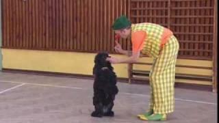 Klaun Pomponi-tresowane psy