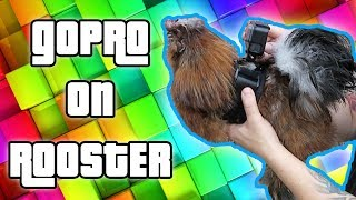 (Attacked) GoPRO On MEAN Rooster - The Omar Gosh Vlogs