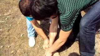 Как поймать скорпиона в мшинской