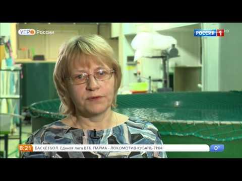 Как российские ученые восстанавливают запасы каспийских осетров