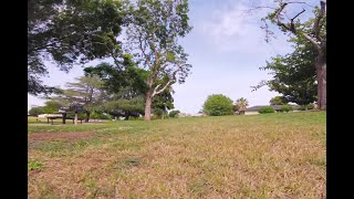 Cloudy Day Blur (FPV FREESTYLE)