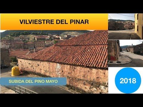 FIESTA DE VILVIESTRE DEL PINAR  SUBIDA DEL PINO MAYO