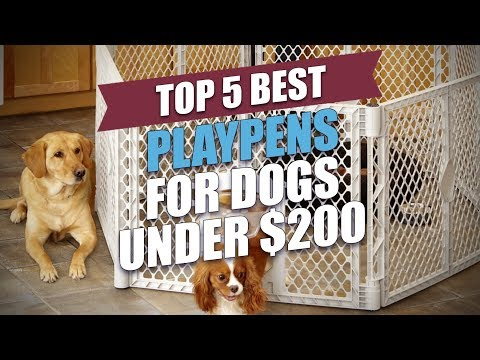 Top 5 Best Playpens For Dogs Under $200
