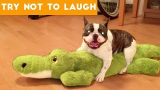 Cute Funny Dogs & Cat Videos Animals Compilation | Funny Pet Videos June 2018