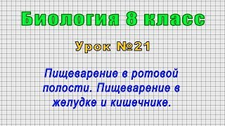 Биология 8 класс Урок 21