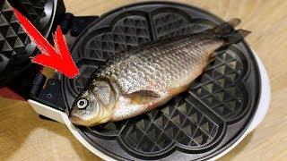 EXPERIMENT WAFFLE IRON vs FISH Herring