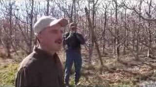 UMass Fruit Advisor - 11/11/2007