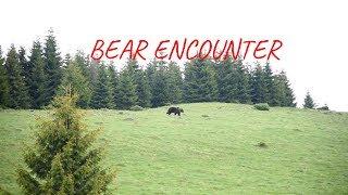 Intalnire cu ursul pe Muntele Ghitu 2018 - Bear Encounter in Romania Wilderness