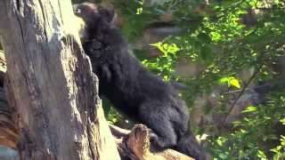 6 Things You Probably Didn't Know About Andean Bears