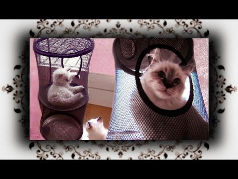 🐱 IKEA FÄNGST für Katzen Klettertunnel Kletterturm   Scrambling tube for cats