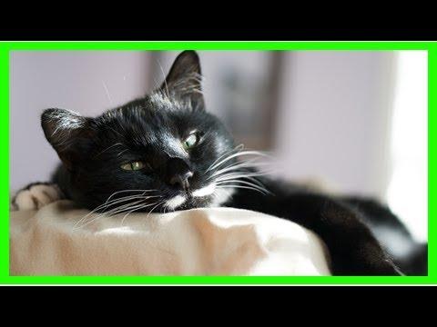 Katze entwurmen: Das solltest du beachten