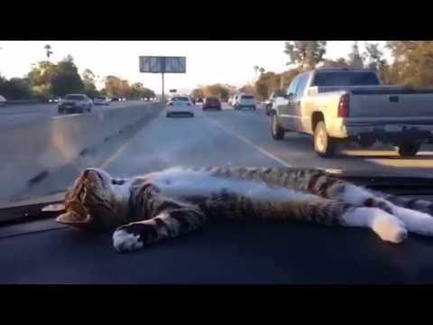Anteprima Video Gatto dormiglione...provate a svegliarlo!!