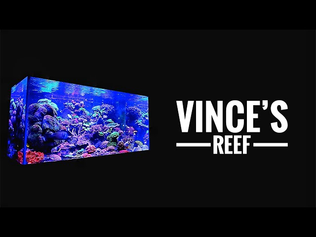 Vince's REEF TANK - 2.5 years without a water change!