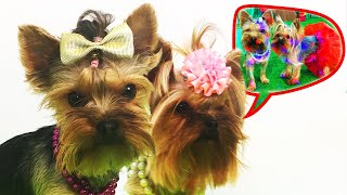 Skip to my Lou with funny dogs- Nursery Rhyme song for kids