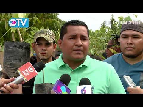 Jóvenes siembran árboles por la paz, la vida y la esperanza en Managua