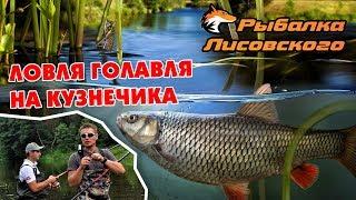 Ловля голавля на кузнечика. Рыбалка Лисовского.