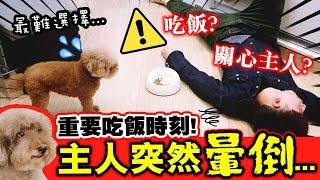 【⚠️突發】吃飯時間主人突然暈倒😨,狗狗會「先吃飯還是救主人」?🐶Muffin、Brownie狗生最難選擇!(中字)