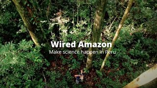 The Wired Amazon