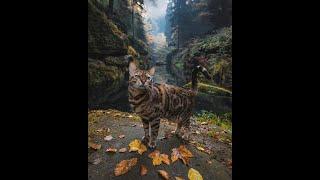 Теории современного искусства. Философия животных и современное искусство
