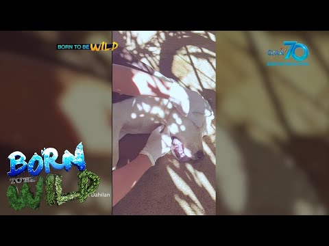 [GMA]  Born to be Wild: 'Hachiko,' the hero dog