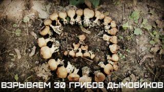 ВЗРЫВАЕМ 30 ГРИБОВ ДЫМОВИКОВ