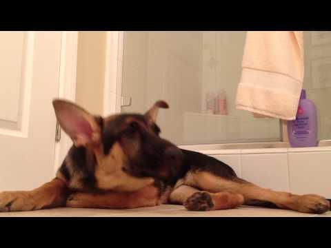 Hund og eier i tonedøv duett