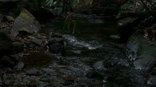 Sound of stream 01