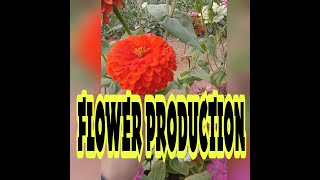 preview picture of video 'AICAT INDONESIA 17 : FLOWER PRODUCTION'