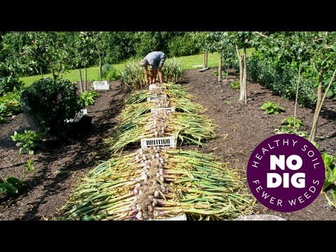 , title : 'Grow garlic, an easy crop with no dig, hard or softneck, and tips for harvest