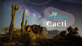 Cacti | Fun Facts About Cacti | The Good and the Beautiful
