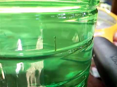 Il girasole di zucca semina da vermi di lyambliya