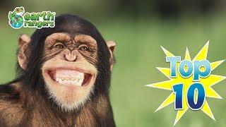 Top 10: Animal Jokes