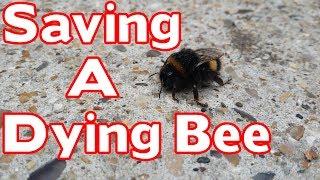 Feeding a Dying Bee Sugar Water