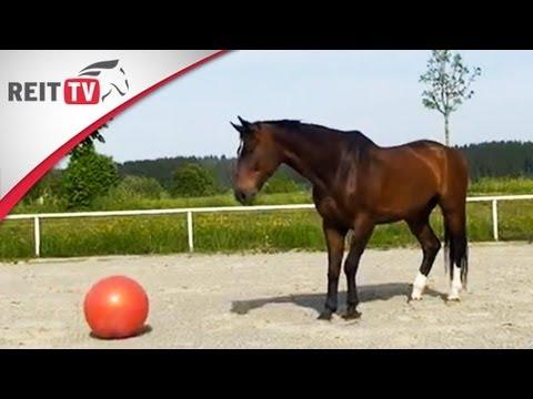 Streuten des Pferdeerregers hinzu