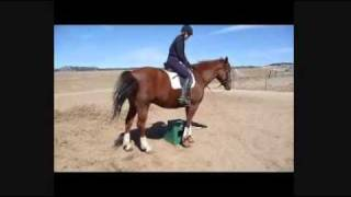 How To Teach A Horse Piaffe Part 3: Piaffe Baby Steps From Groundwork To The Saddle