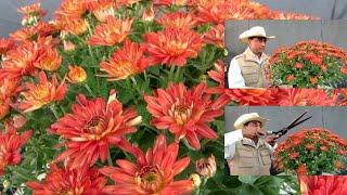 Chrysanthemum  / Top 6 Hacks  For 1000 Flowers/  Winter Flower