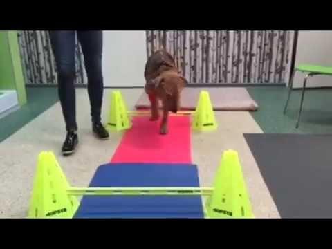 Halius ćwiczenia koślawego po zabiegu