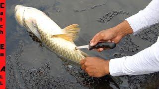 FISH SURGERY after BIRD ATTACK!