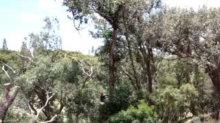 preview picture of video 'Maui Excavation - General Contractor Services and Tree removal'