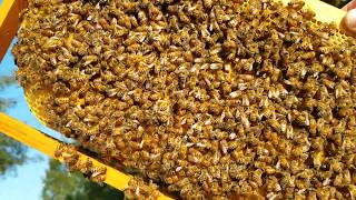 Do late season honeybee splits build up in time for winter? Here is proof