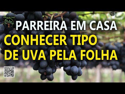 , title : 'Conheça sua Uva pela Folha, veja as mais comuns e identifique a sua Parreira com Sergio Semerdjian