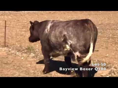BAYVIEW BOXER Q100