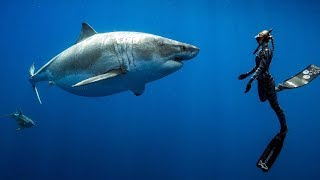 Searching for the Worlds Largest Great White Shark! ft. Ocean Ramsey (Hawaii, USA)