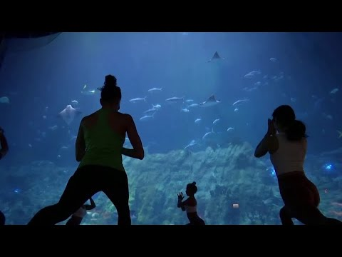 Aquarium yoga among Hong Kong Ocean Park's new offerings
