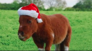 Amazon Prime 'Little Horse' Christmas edition - Little Donkey